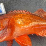 durable fishing trailers for ling cod and rockfish